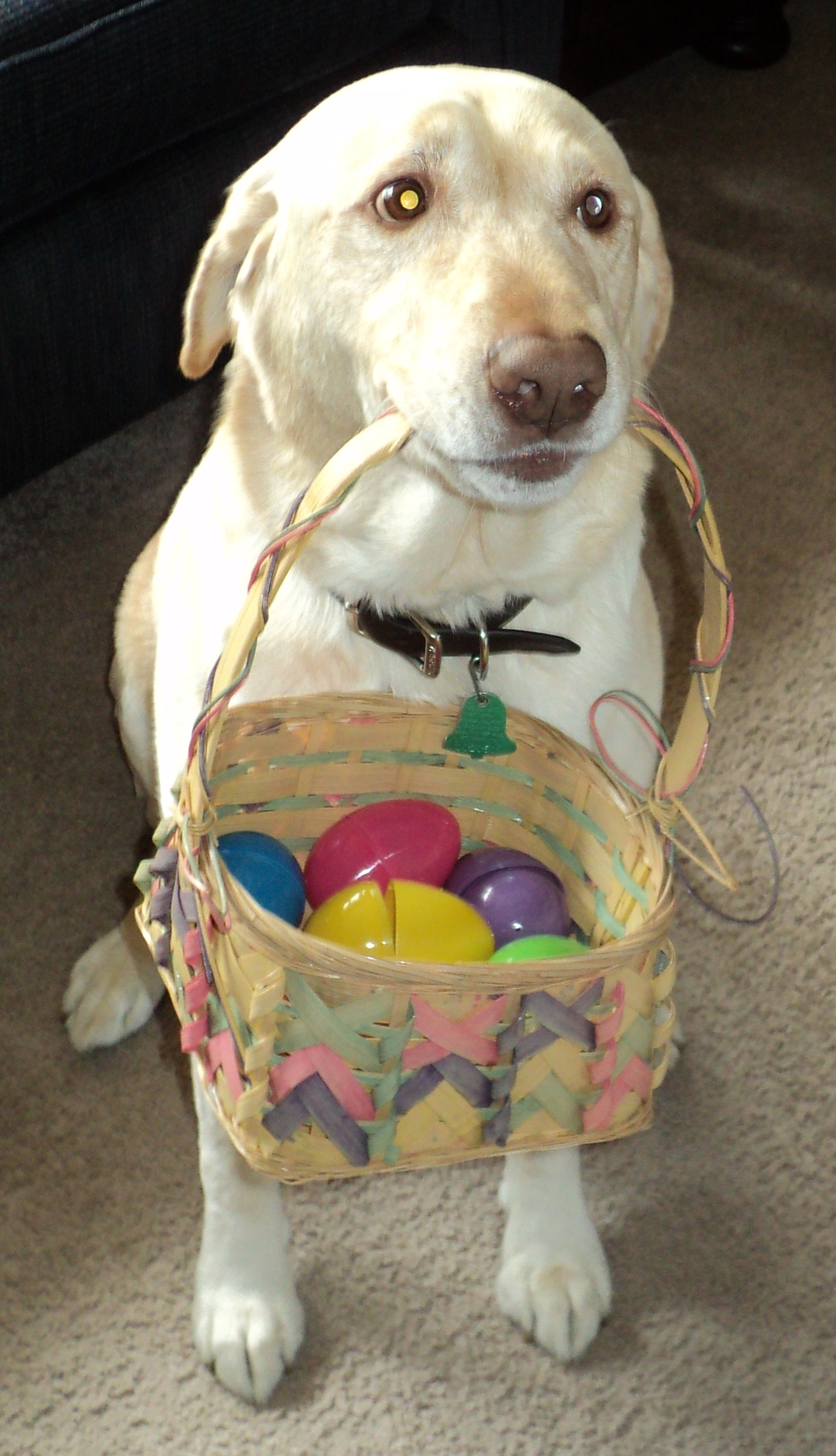 Easter Dave Isom